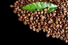 Collected coffee beans in the corner with leaf on black Stock Photos