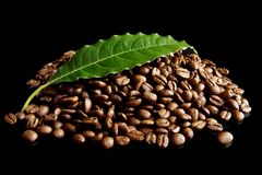 Collected coffee beans with leaf on black Royalty Free Stock Photo
