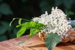 Collected elderflower Stock Photos