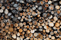 Collected firewood Royalty Free Stock Photo