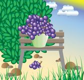 The collected grapes cost on a bench Stock Photo