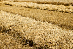 Collected harvest Royalty Free Stock Images