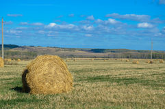 Collected in stacks of hay in the field. Royalty Free Stock Images