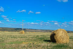 Collected in stacks of hay in the field. Royalty Free Stock Photos