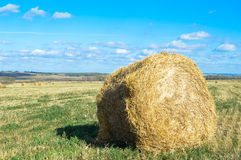 Collected in stacks of hay in the field. Stock Image