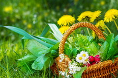 Collected Wild Herbs In Basket Royalty Free Stock Photos