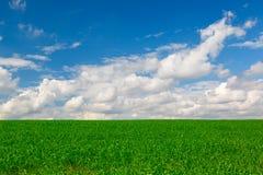 Collectes d'herbe verte contre le ciel bleu photo libre de droits