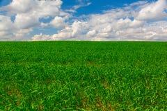 Collectes d'herbe verte contre le ciel bleu photographie stock