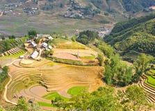 Collectes de riz dans le village de minorité de Hmong images libres de droits
