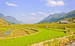 Collectes de riz en vallée de montagne de Sapa image libre de droits
