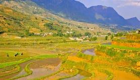 Collectes de riz en vallée de montagne de Sapa images stock