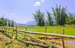Collectes en bambou de frontière de sécurité et de riz photographie stock