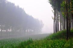 Collectes et forêts photo libre de droits
