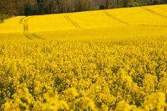Collectes jaunes roulant au-dessus de la campagne image stock