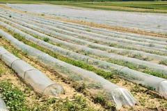 Collectes sur des terres cultivables image libre de droits