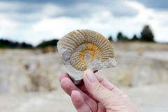 Collecting ammonite fossil. In limestone rock stock photography