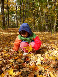 Collecting autumn leaves royalty free stock images
