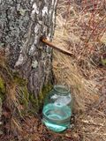 Collecting birch juice Royalty Free Stock Photography