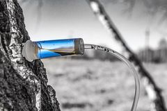 Collecting birch SAP in early spring in a plastic pet bottle, with a blurred background. Collecting birch SAP in early spring in a plastic pet bottle, with a royalty free stock image