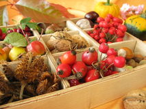 Collecting box with fall fruits. Collecting box with walnuts, chestnuts and other fall fruits Stock Photography