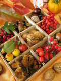 Collecting box with fall fruits. Collecting box with walnuts, chestnuts and other fall fruits Stock Images