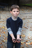 Collecting chestnuts. A boy shows proud his collected chestnuts Royalty Free Stock Photo