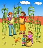 Collecting corn Stock Photo