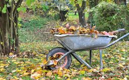 Collecting dead leaves Royalty Free Stock Image