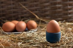 Eggs on a straw bed royalty free stock photos