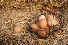 Collecting fresh farm eggs Stock Photo