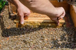 Collecting Honey Royalty Free Stock Photo