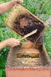 Collecting Honey Royalty Free Stock Photos