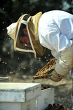 Collecting honey for Rosh Hashana Royalty Free Stock Photo