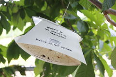 Collecting Insect Samples From Trees Stock Photo