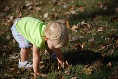 Collecting leaves. Toddler girl bending to collect leaves Royalty Free Stock Photos