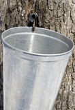 Collecting Maple Tree Sap Royalty Free Stock Images