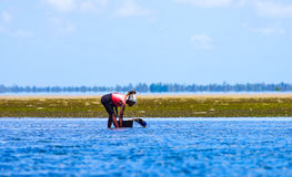 Collecting mussels with low tide stock image