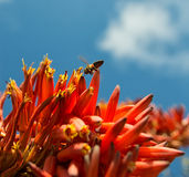 Collecting Nectar Stock Photography
