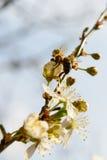 Collecting pollen stock photo