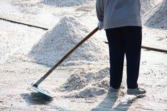Collecting salt at salt field Stock Image