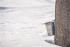 Collecting sap from a big maple tree. Collecting sap into a pail attached to a big maple tree, surrounded by melting snow. Maple syrup production royalty free stock photography