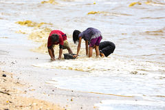 Collecting sea shell on beach stock images