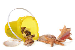 Collecting Sea Shells Royalty Free Stock Image