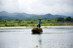 Collecting seaweed for the garden on inlay lake. Burma Royalty Free Stock Image
