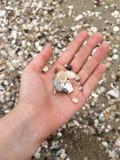Collecting shells stock photos