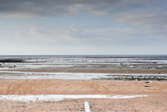 Collecting shells at sea. Collecting shells in the sea in Normandy royalty free stock images