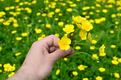 Collecting some flowers. Hand holding a bouquet of yellow spring flowers for your loved one Stock Images