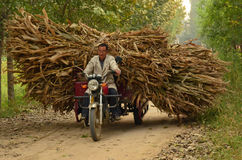Collecting Sweetcorn on Motorcycle, China Stock Image