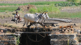 Collecting Water in India 4 Royalty Free Stock Images
