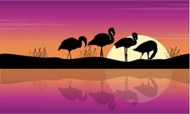Collection与火鸟剪影的湖场面 库存图片